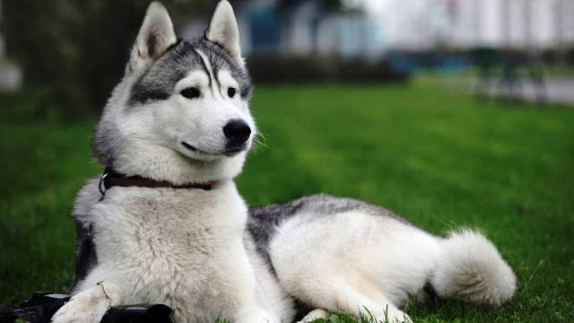 The 10 Most Dangerous Dog Breeds in The World - Newslibre