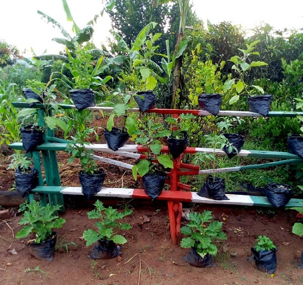 Mak Alumnus Transforming Lives Through Urban Farming and Micro gardening 2