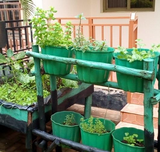 Mak Alumnus Transforming Lives Through Urban Farming and Micro gardening 5