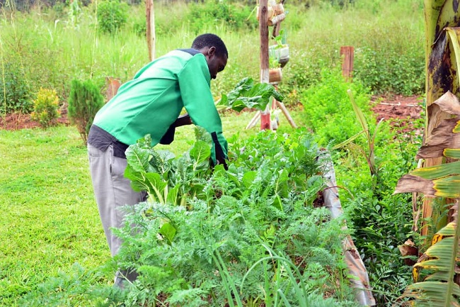 Mak Alumnus Transforming Lives Through Urban Farming and Micro gardening 3