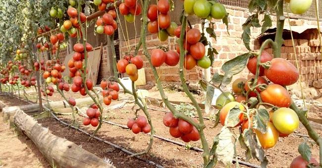 Mak Alumnus Transforming Lives Through Urban Farming and Micro gardening 4