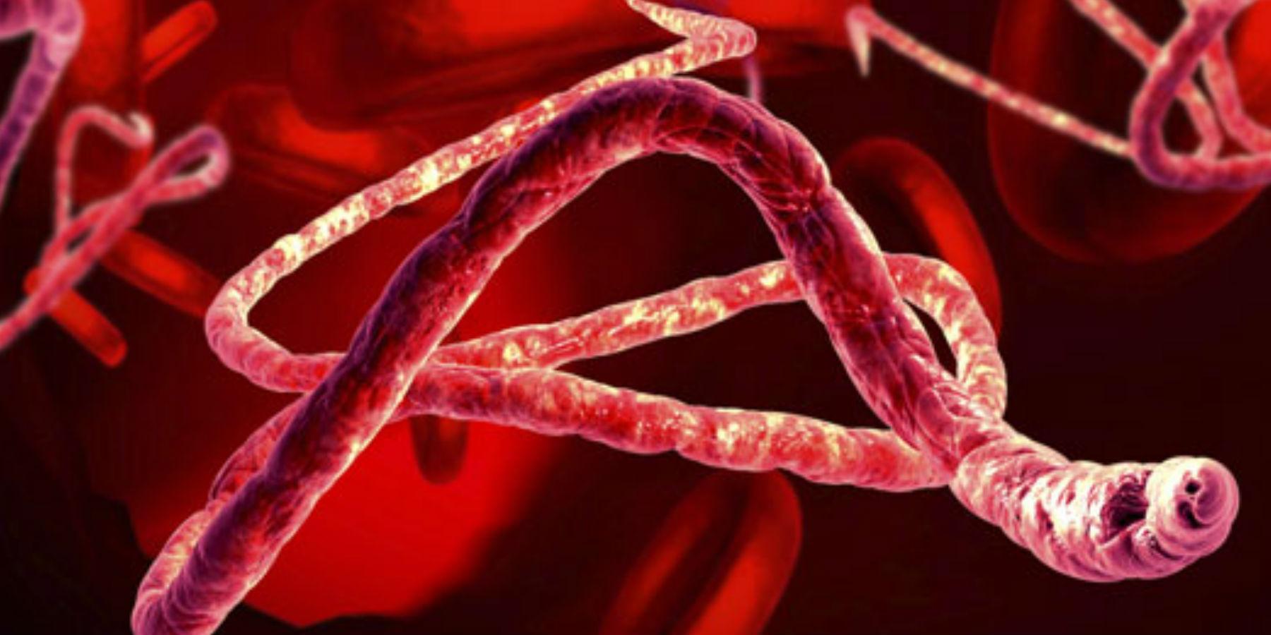 Ebola virus vaccine.
