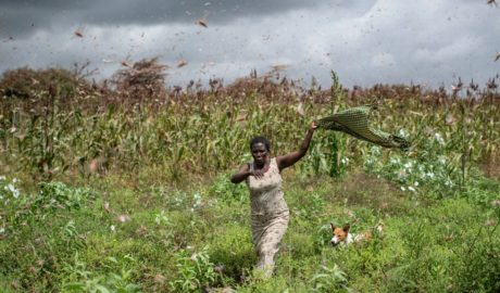 Locusts Could Cause Famine in East Africa - Newslibre