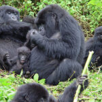 Rwanda Now Offering Virtual Tourism amid COVID19
