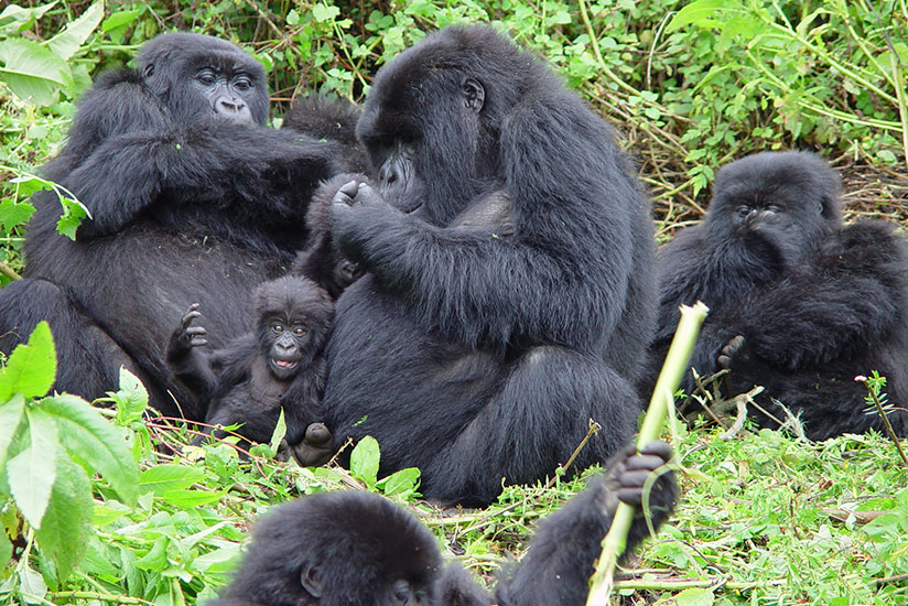 Rwanda Now Offering Virtual Tourism amid COVID19 - Newslibre