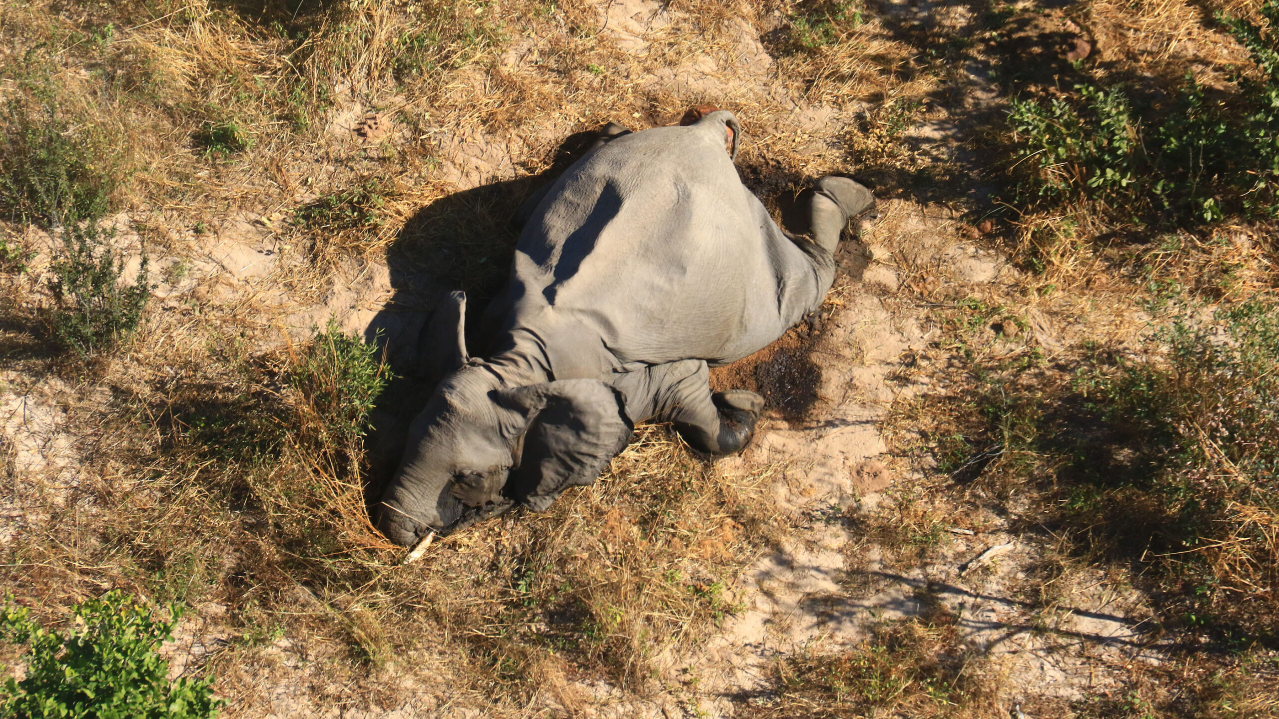 Bacteria in Water is the Cause of Elephant Deaths in Botswana - Newslibre