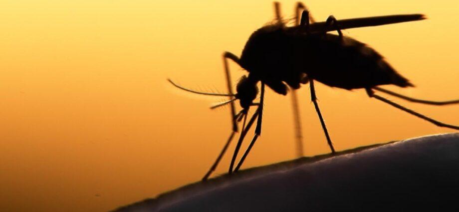 Europe to Develop Highly Efficacious Malaria Vaccine - Newslibre